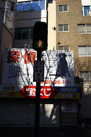 Shinjyuku2006012905_7
